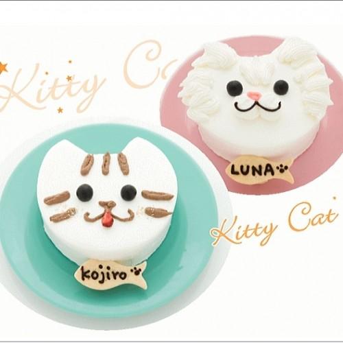 猫用 ケーキ