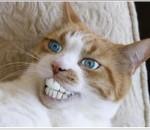 猫トイレと砂のおすすめランキング!大玉で臭わない!流せる猫砂の通販