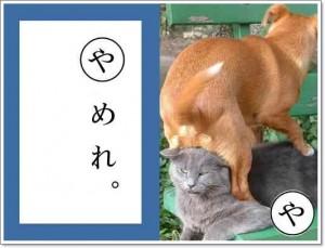 ブサイク猫