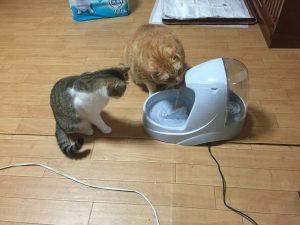 猫 プラチナム 画像