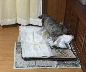 猫 犬トイレ