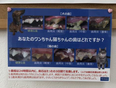 犬猫歯石の進行表
