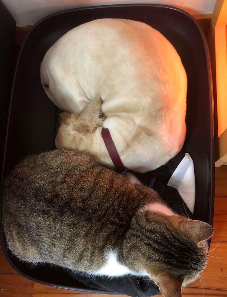 犬と猫の仲良し画像